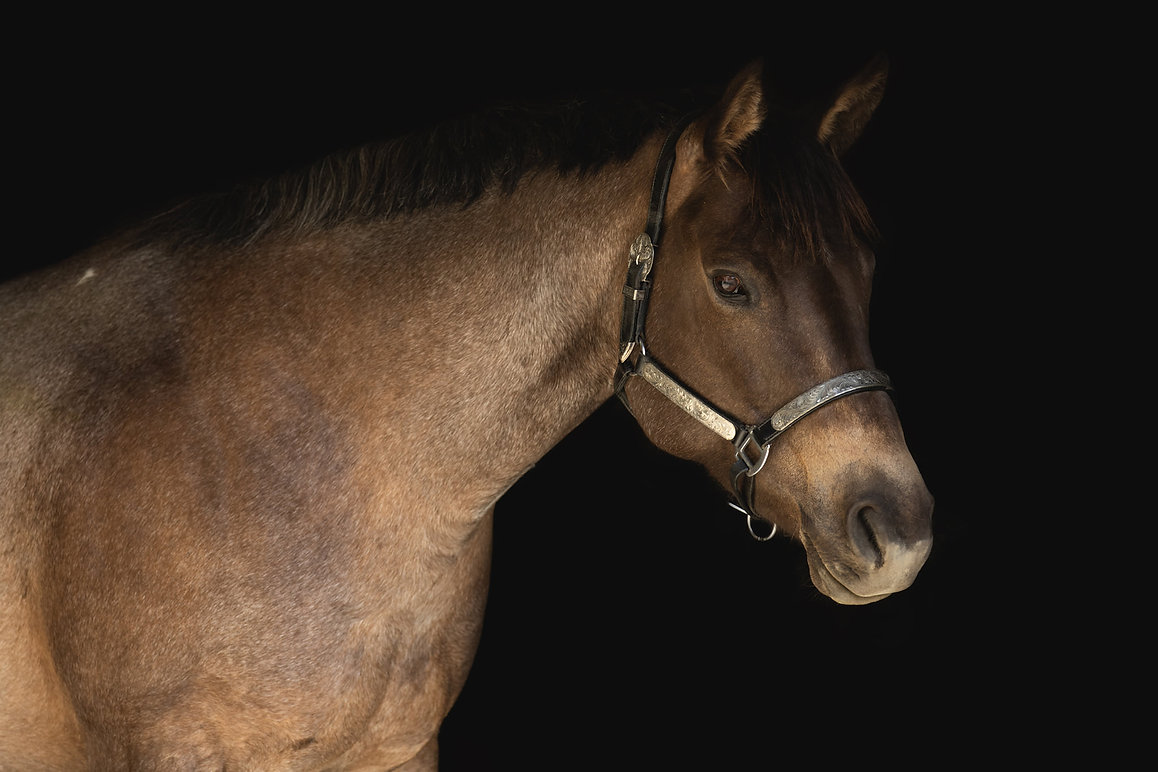 Riarmas Nebraska Mitana Quarter Horses