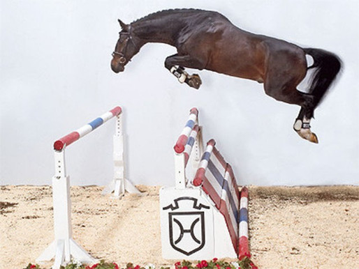 NORTH ISLAND SHOW JUMPING CHAMPS: QUANTUM PROGENY ON A ROLL.