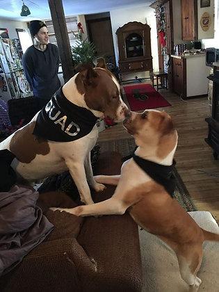 Custom Dog Bandannas