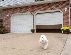 Garage door closing with Dog.jpg