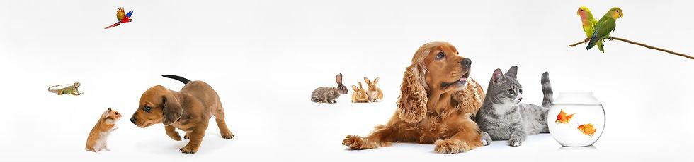 Animal%20Kingdom_edited.jpg