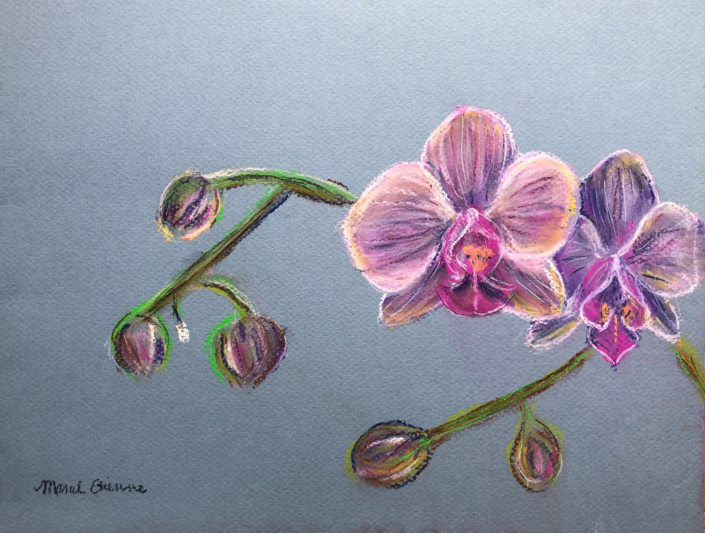 Orchids in Pastel
