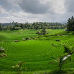 agriculture-asia-bali-654.jpg