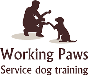 Working Paws Service Dog Training