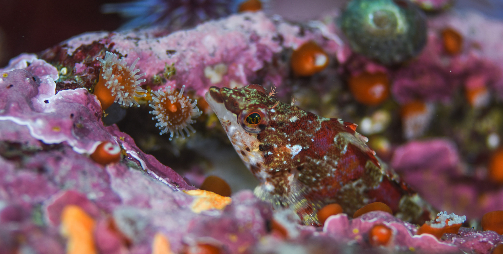 Fish-KelpForest-1.jpg