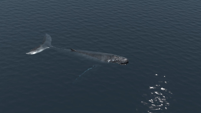 whale%20picture_edited.jpg