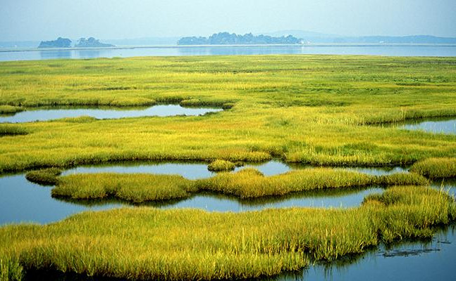 Protective Benefits of Coastal Wetlands