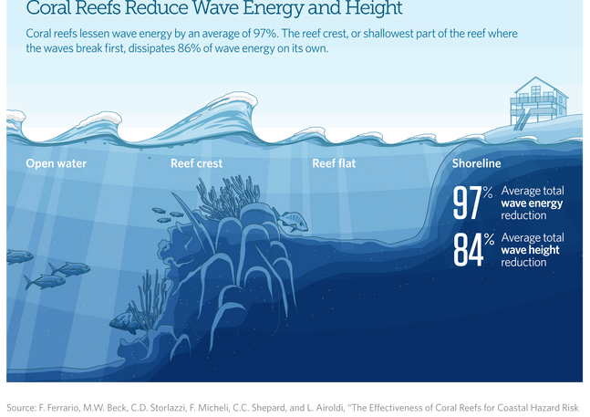 Coral Reef Infographic