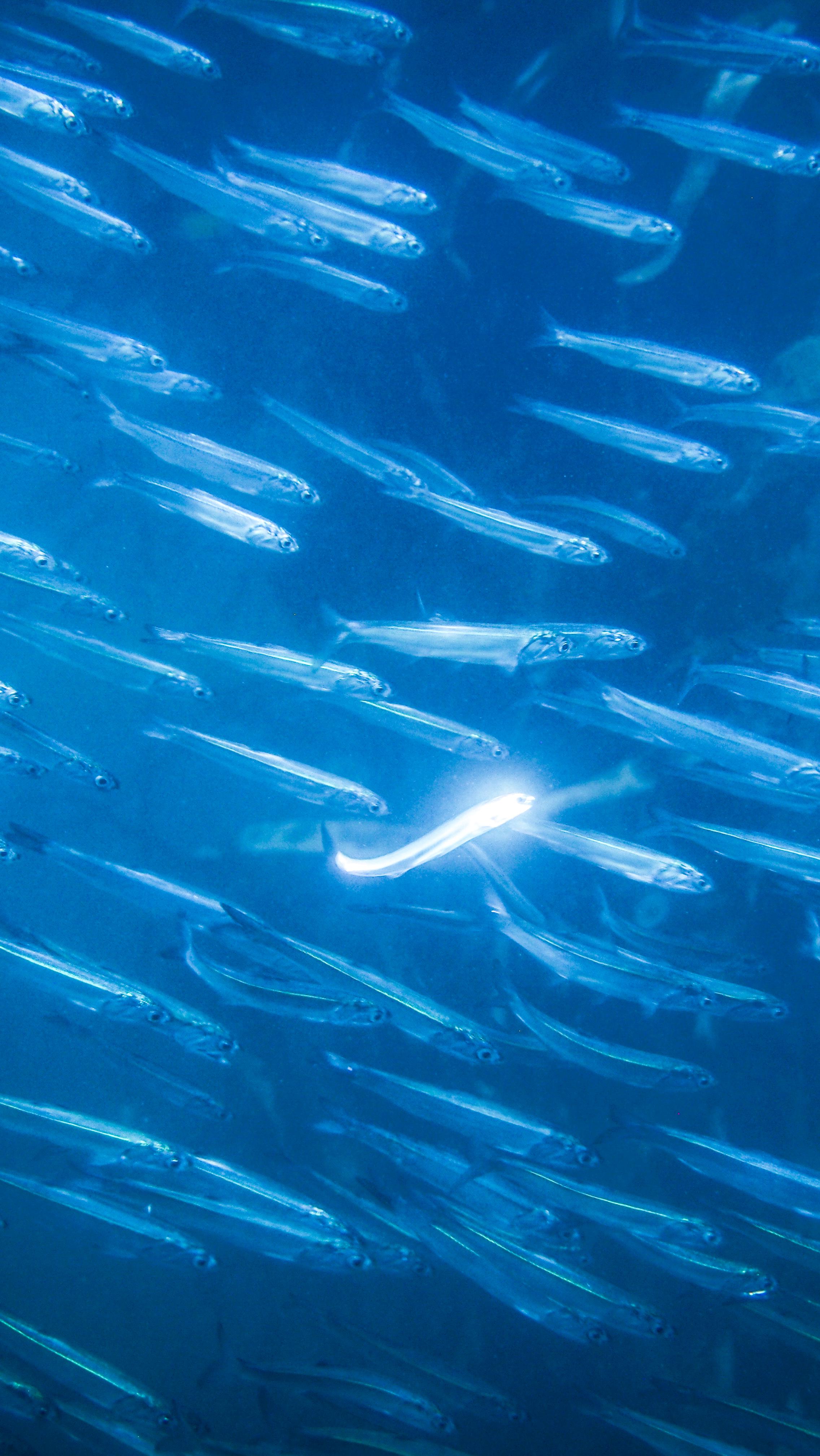 Fish-KelpForest-2