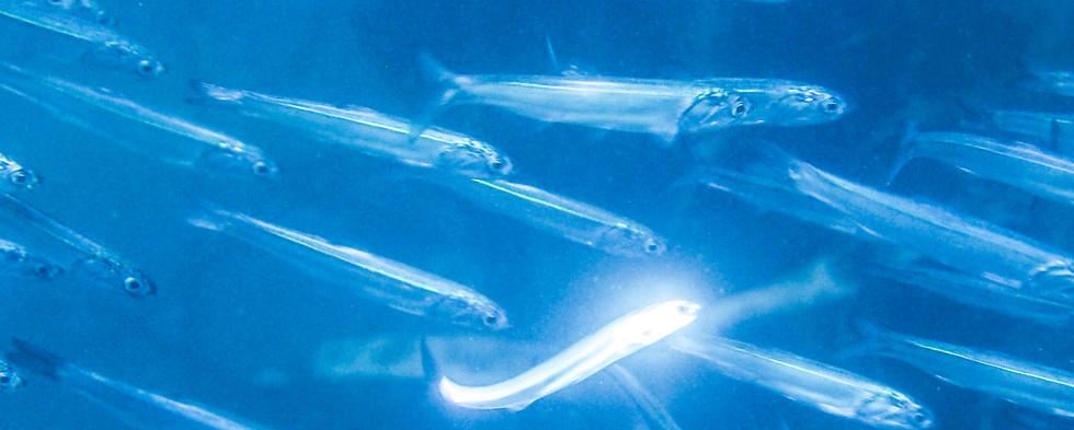 Fish-KelpForest-2.jpg