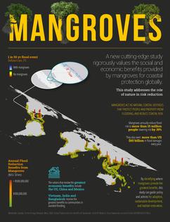 Mangroves and Flood Risk Fact Sheet