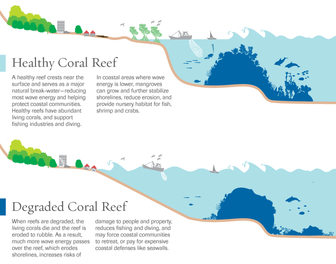 Healthy v. Degraded Coral Reef Graphic