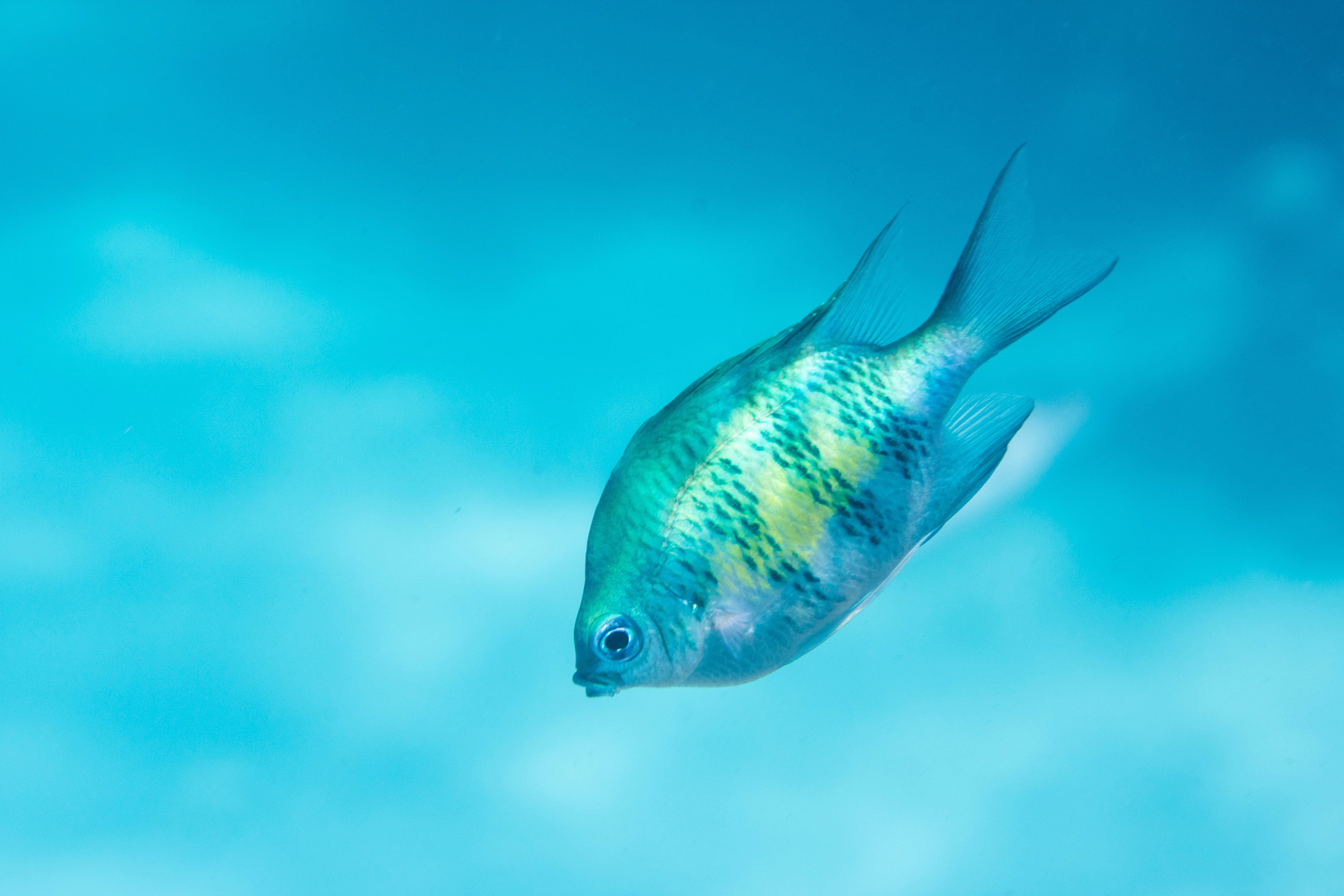 Fish-Tropical-4