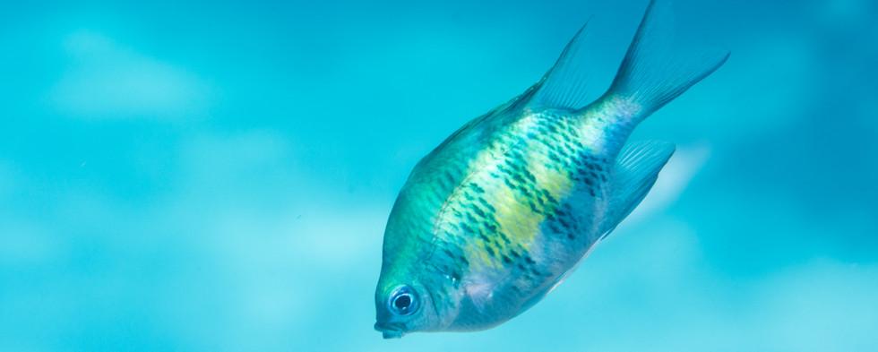 Fish-Tropical-4.jpg
