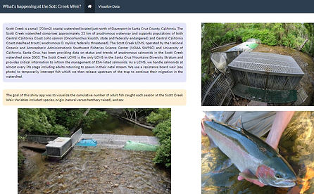 This interactive website displays the cumulative number of adult coho salmon and steelhead trough caught each season (October-July) at the Scott Creek Weir.