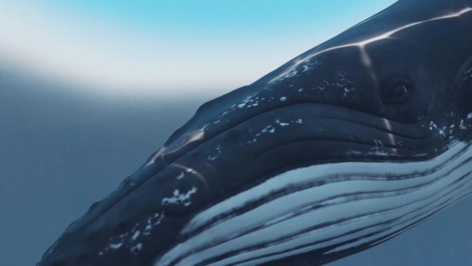 Whale Thumbnail.PNG