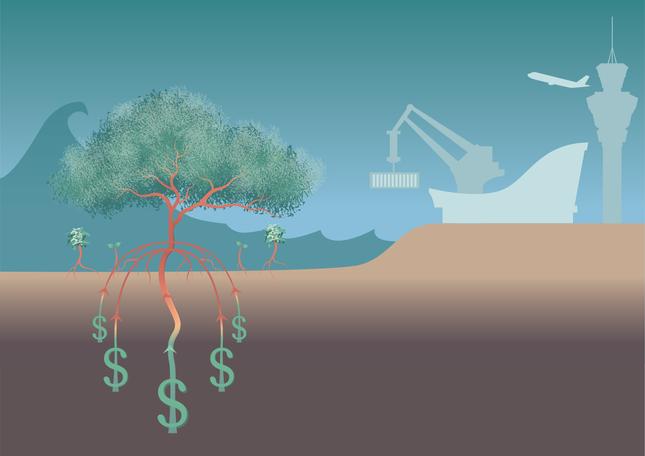 The Benefits of Mangrove Restoration