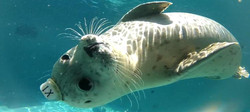 hbseal