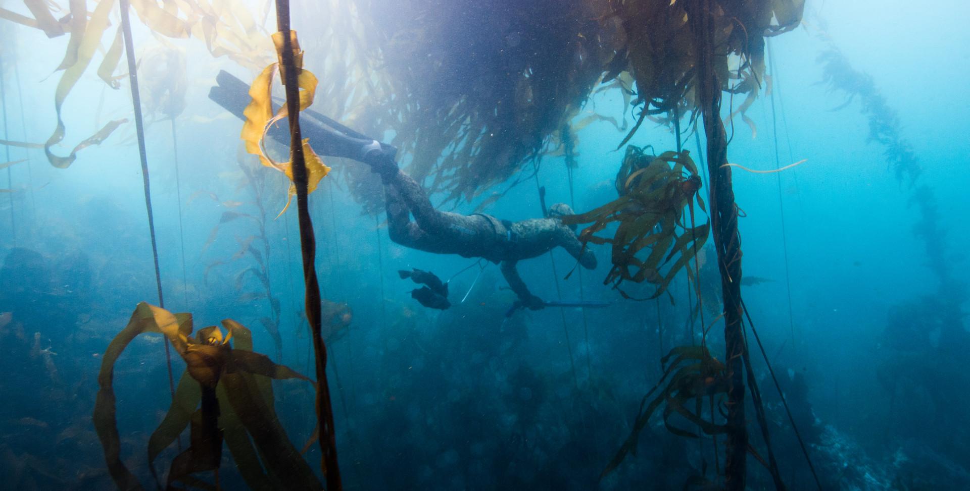 Underwater Scenes-13.jpg