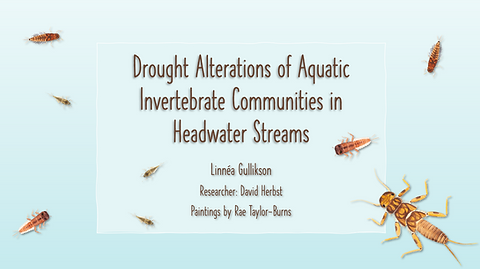 Climate change poses a significant threat to biodiversity in Sierra Nevada headwater streams due to more frequent and prolonged periods of drought. This animation shows the impacts of drought on benthic insect communities that inhabit headwater streams.