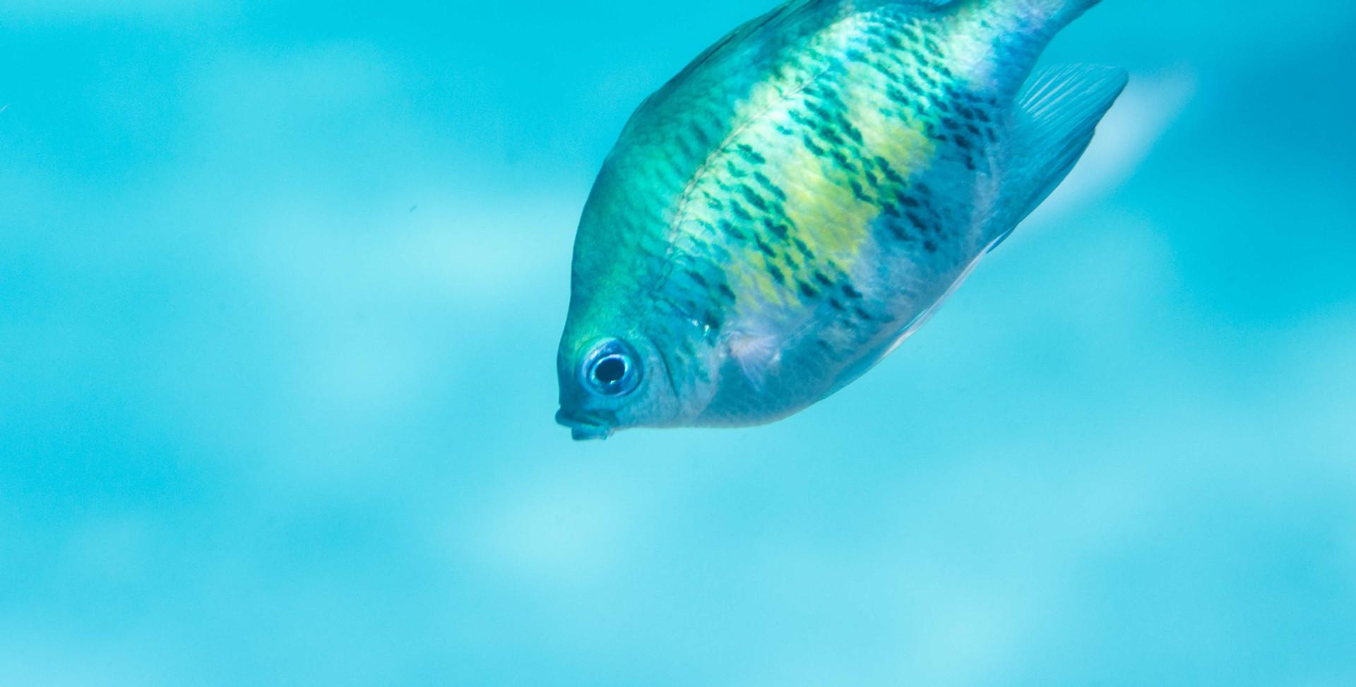 Fish-Tropical-4_cover.jpg