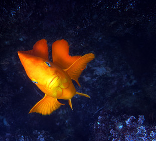 Fish-KelpForest-3.jpg