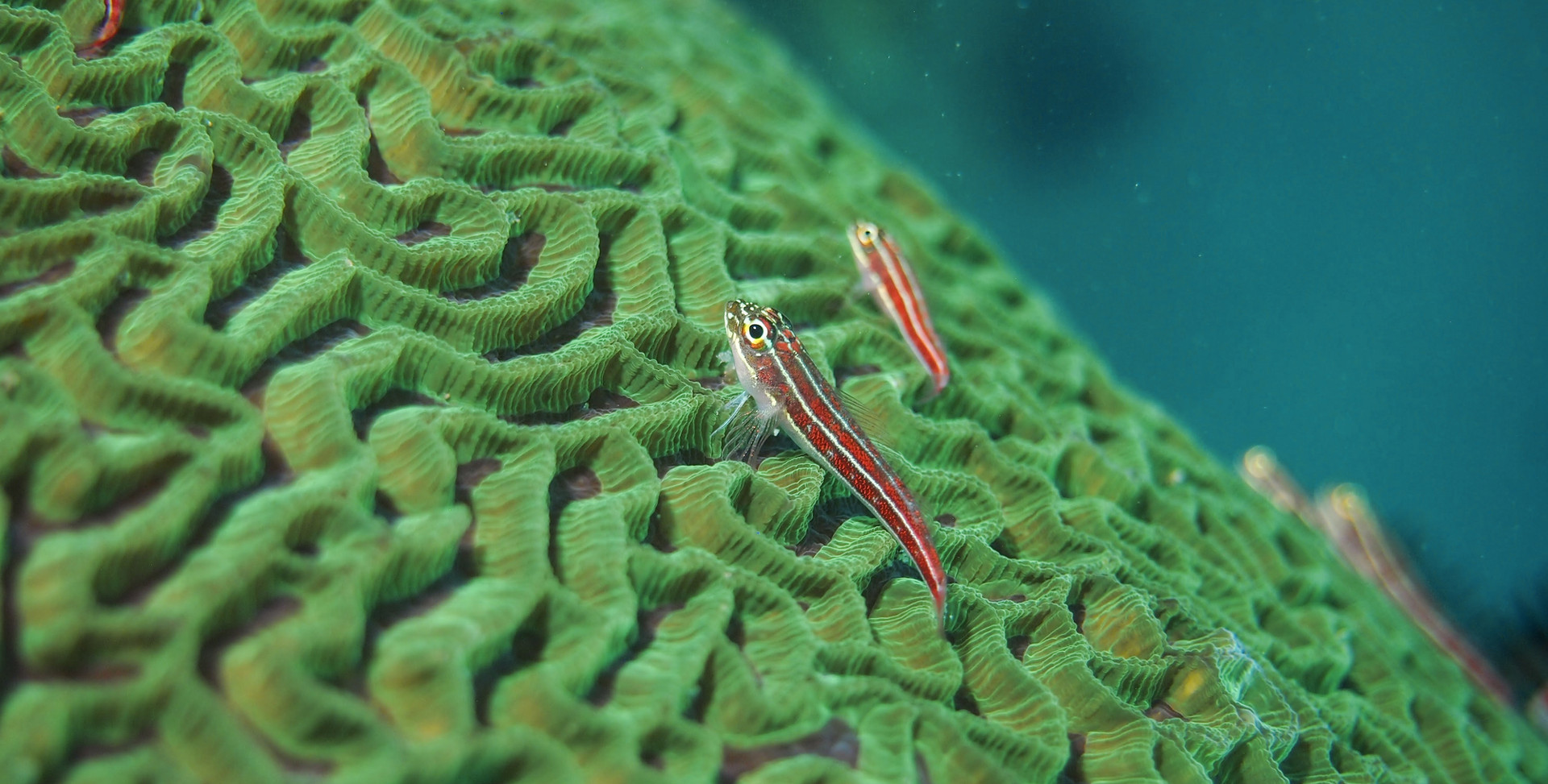 Fish-Tropical-2.jpg