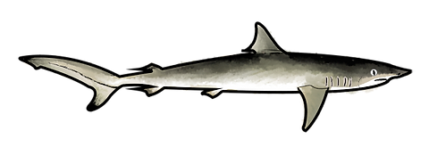 This website provides insight into ongoing research examining the various aspects and consequences of bycatch from 5 major tuna commissions.