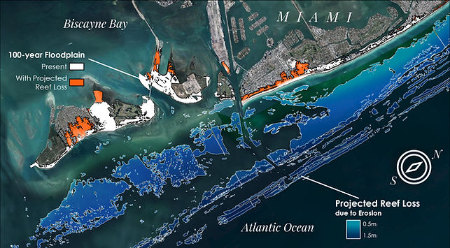 The future loss of reefs will increase flood risk in Florida. The map displays the projected loss in height of reefs (blue) off Miami by 2100 based on current rates of degradation. The 100-year floodplain would increase substantially (orange) based on this reef loss alone. Increases in sea level, storms, population, and development would add further risk.  Map created in collaboration with Jessica Kendall-Bar and Chris Lowrie using data from UCSC & USGS  Report: Storlazzi et al. 2021 https://pubs.er.usgs.gov/publication/ofr20211055