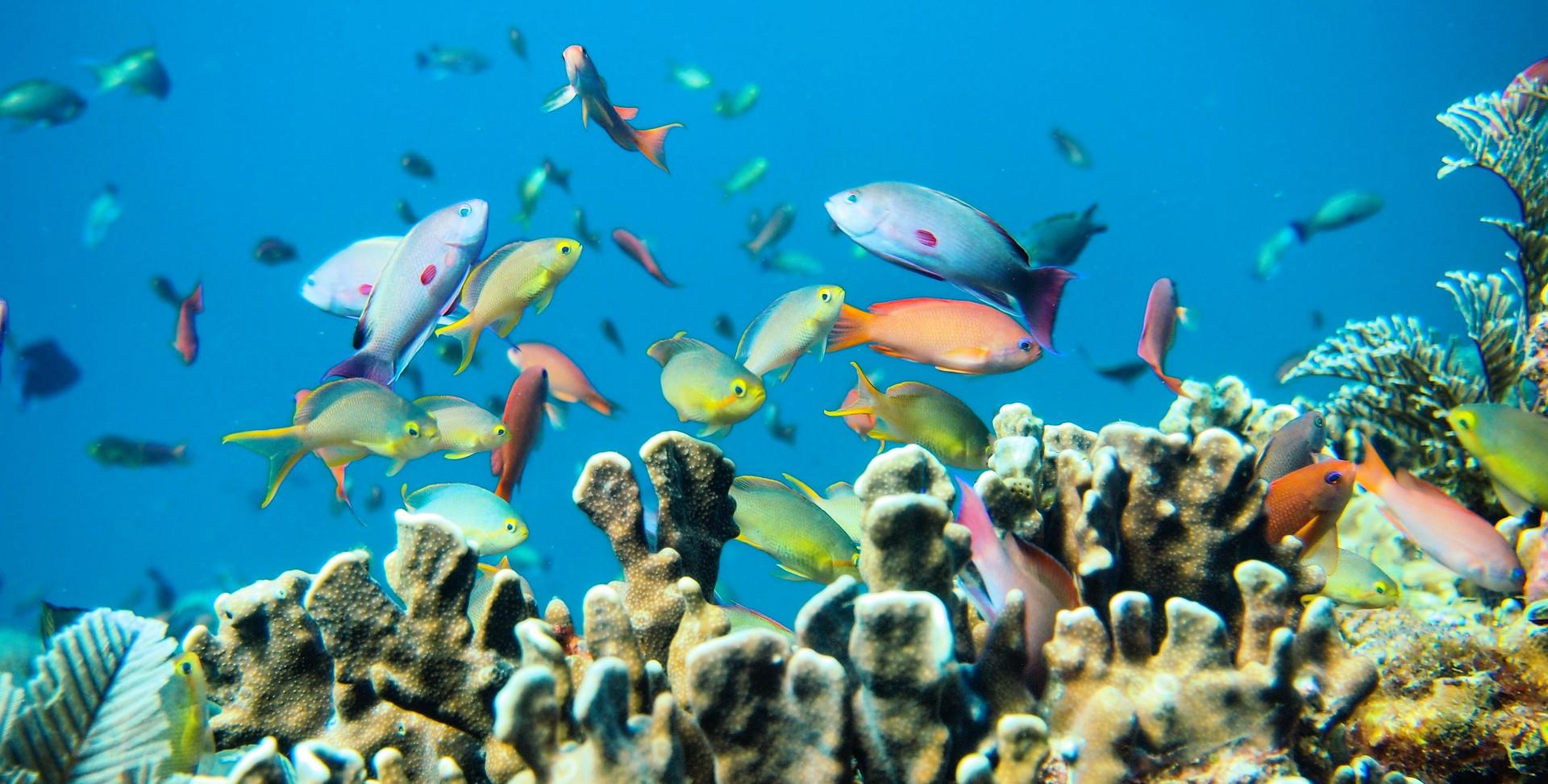 Fish-Tropical-1.jpg