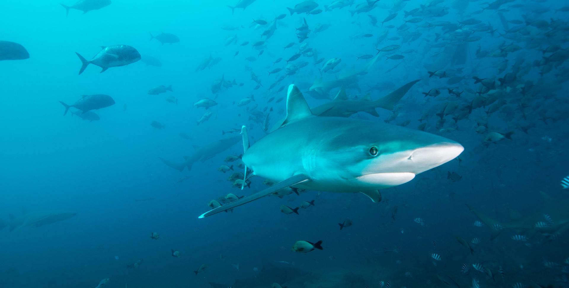 Sharks-1.jpg