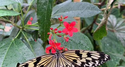magic-wings-butterfly-conservatoryjpg