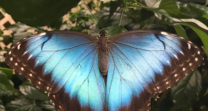 magic-wings-butterfly-conservatory-2jpg