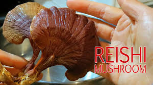 How Reishi Mushroom Extract Improve Immune System?