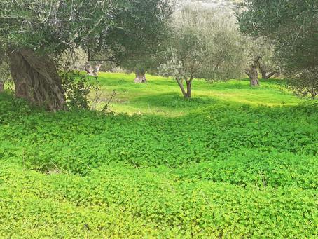 Kreta, herbe Schönheit