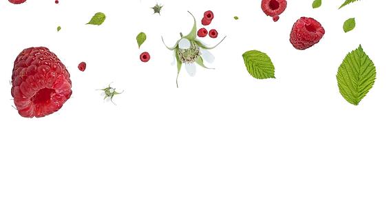 raspberries-falling-down-on-white-backgr