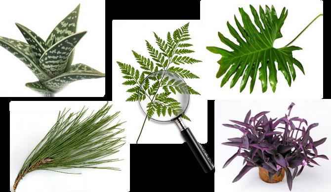 Importância da Botânica na formação de Paisagistas
