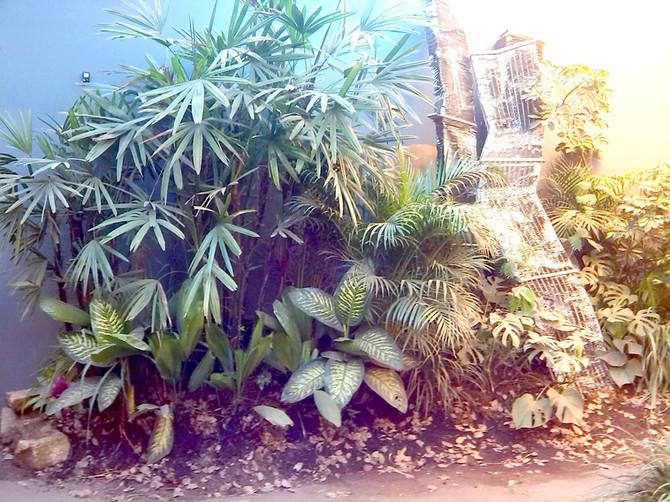 Um jardim tropical dentro do Museu???