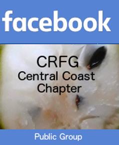 FacebookCRFGCC.png