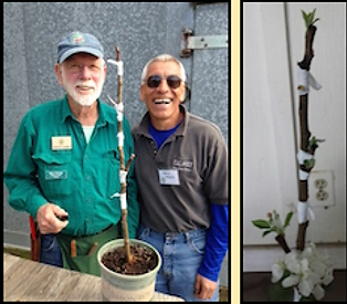 Two CRFG grafters laugh after grafting four scions to a single rootstock.