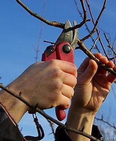 PruningHands.jpg