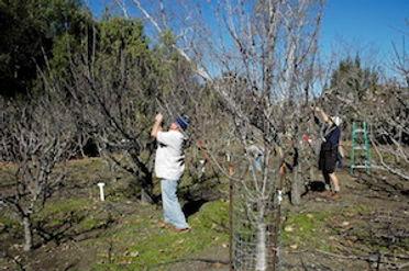 orchardWorkday20160206.jpg