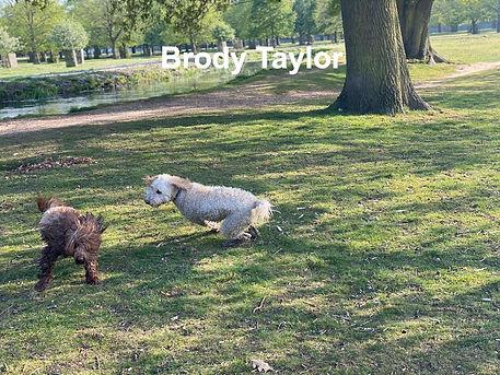 Brody%20Taylor_edited.jpg