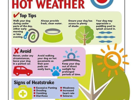 Keep your dog safe in hot weather