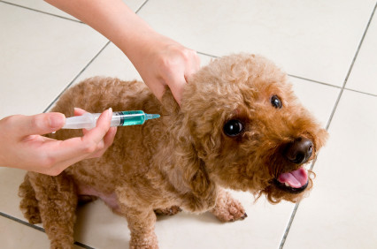 Are we over-vaccinating our dogs?