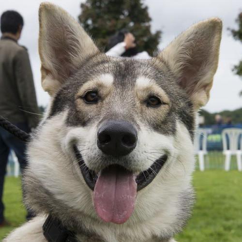Dog Trouble Foundation Online Dog Show 2020