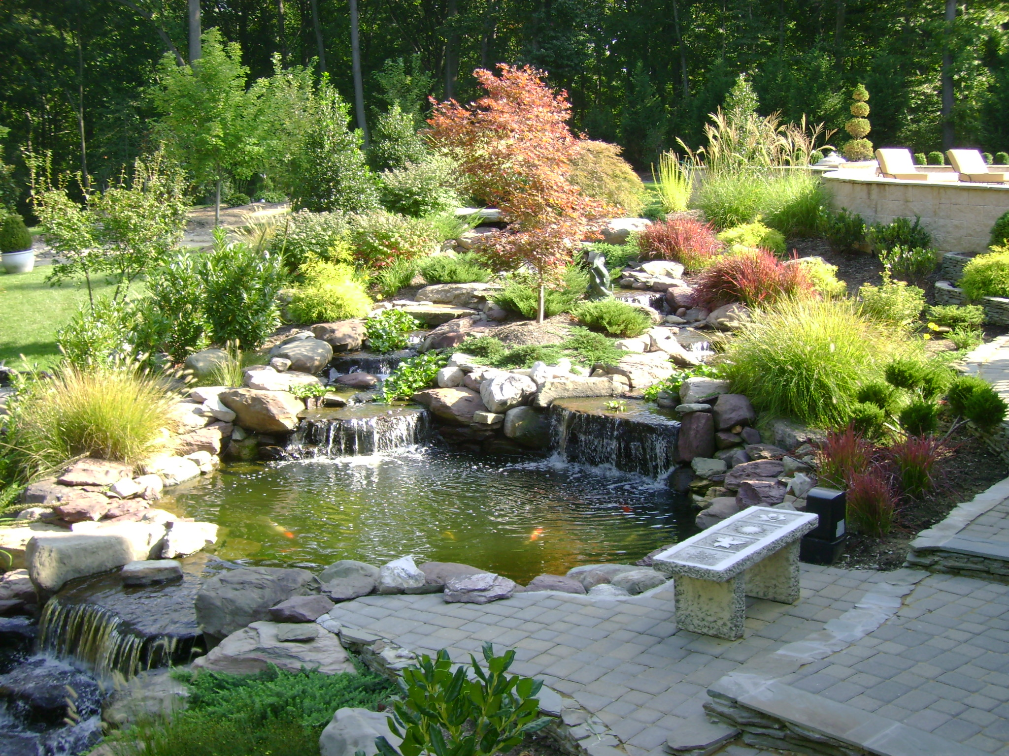 Pond Pavers Plants