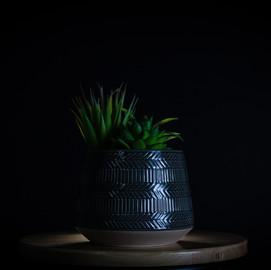 Plant_.jpg