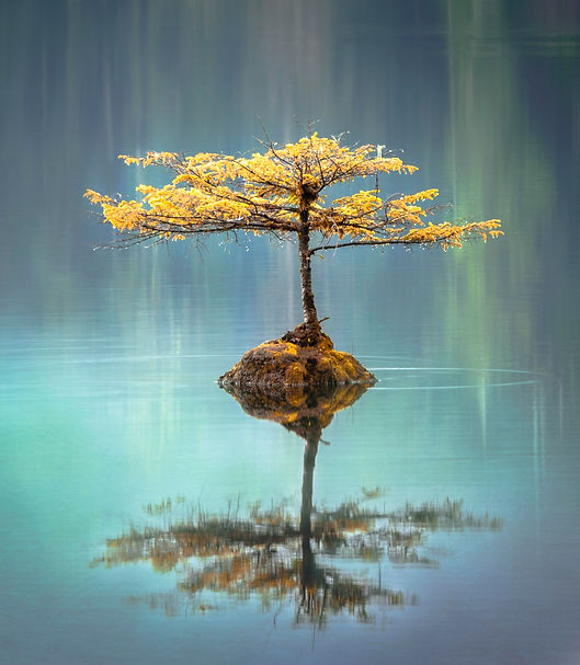 A tree on a still pond to show calm scenes. This is what can be achieved by working with a behavioural change specialist like Harley Street Consulting in London