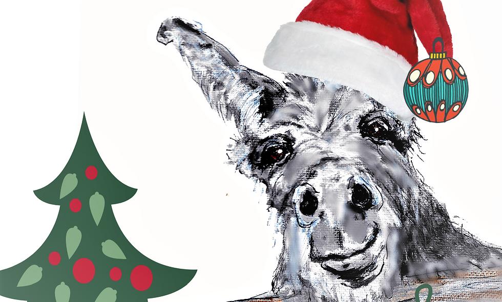 Christmas, Holiday Card, Donkey Christmas  Card, Donkey Card